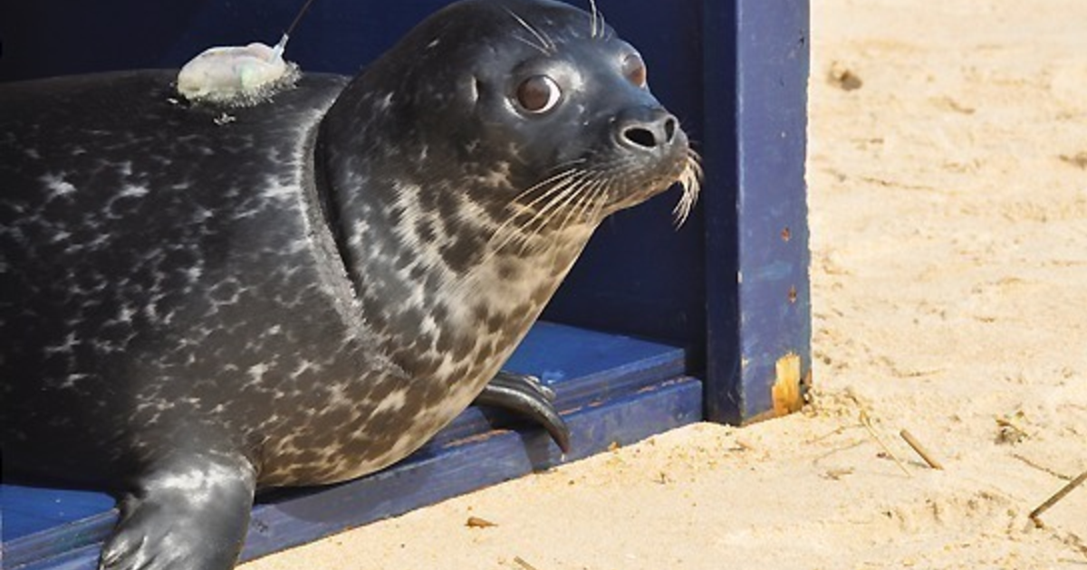 Heal the Seals, donate to National Aquarium